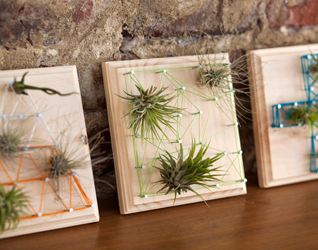 DIY String Art Projects - Air Plant String Art - Cool, Fun and Easy Letters, Patterns and Wall Art Tutorials for String Art - How to Make Names, Words, Hearts and State Art for Room Decor and DIY Gifts - fun Crafts and DIY Ideas for Teens and Adults http://diyprojectsforteens.com/diy-string-art-projects