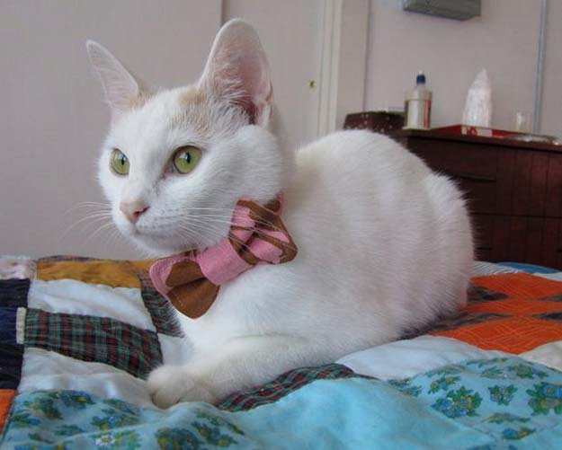 DIY Projects for Your Pet - Easy Cat Bow Tie Sewing Tutorial- Cat and Dog Beds, Treats, Collars and Easy Crafts to Make for Toys - Homemade Dog Biscuits, Food and Treats - Fun Ideas for Teen, Tweens and Adults to Make for Pets http://diyprojectsforteens.com/diy-projects-pets