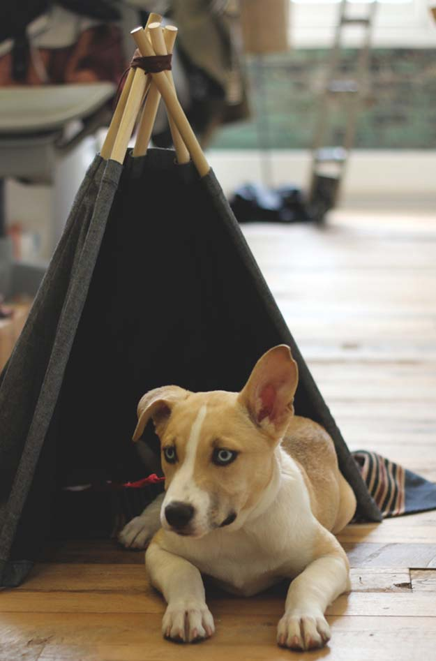 41 crafty diy projects for your pet diy projects for your pet do it yourself dog tepee tent cat and dog solutioingenieria Gallery