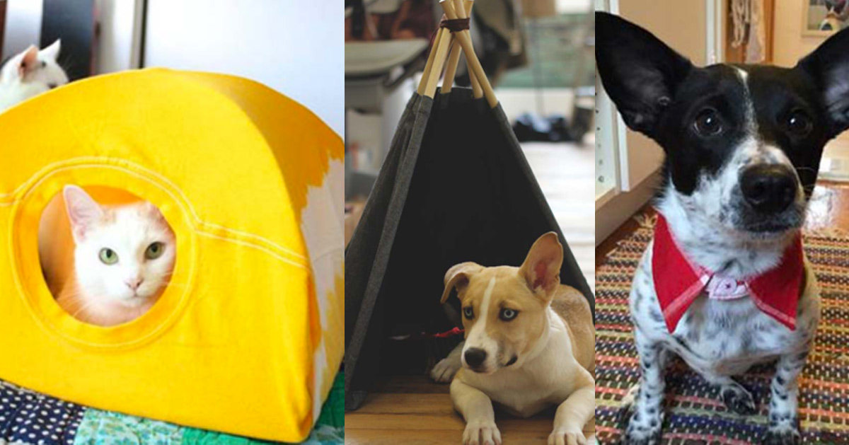 DIY Projects for Your Pet -Cat and Dog Beds, Treats, Collars and Easy Crafts to Make for Toys - Homemade Dog Biscuits, Food and Treats - Fun Ideas for Teen, Tweens and Adults to Make for Pets http://stage.diyprojectsforteens.com/diy-projects-pets