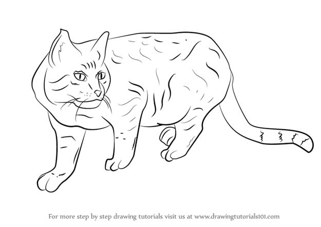 Cool Drawing Tutorials - How To Draw A Wildcat - Learn How To Draw Animals, Easy People, Step by Step Drawing and Tutorial With Instructions - Creative Arts and Crafts Ideas for Teens - Shapes, Shading, Buildings, School Art Projects, Drawing for Beginners and Teenagers, Kids http://diyprojectsforteens.com/cool-drawing-tutorials