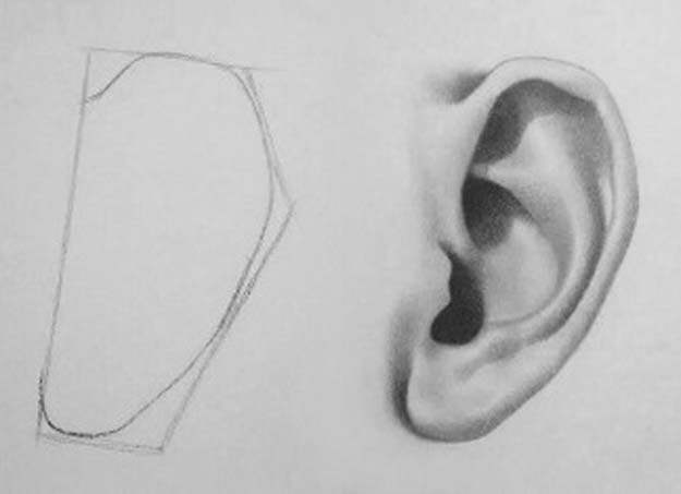 Cool Drawing Tutorials - How To Draw An Ear, Ears- Learn How To Draw Animals, Easy People, Step by Step Drawing and Tutorial With Instructions - Creative Arts and Crafts Ideas for Teens - Shapes, Shading, Buildings, School Art Projects, Drawing for Beginners and Teenagers, Kids #drawing #art #drawingtutorials