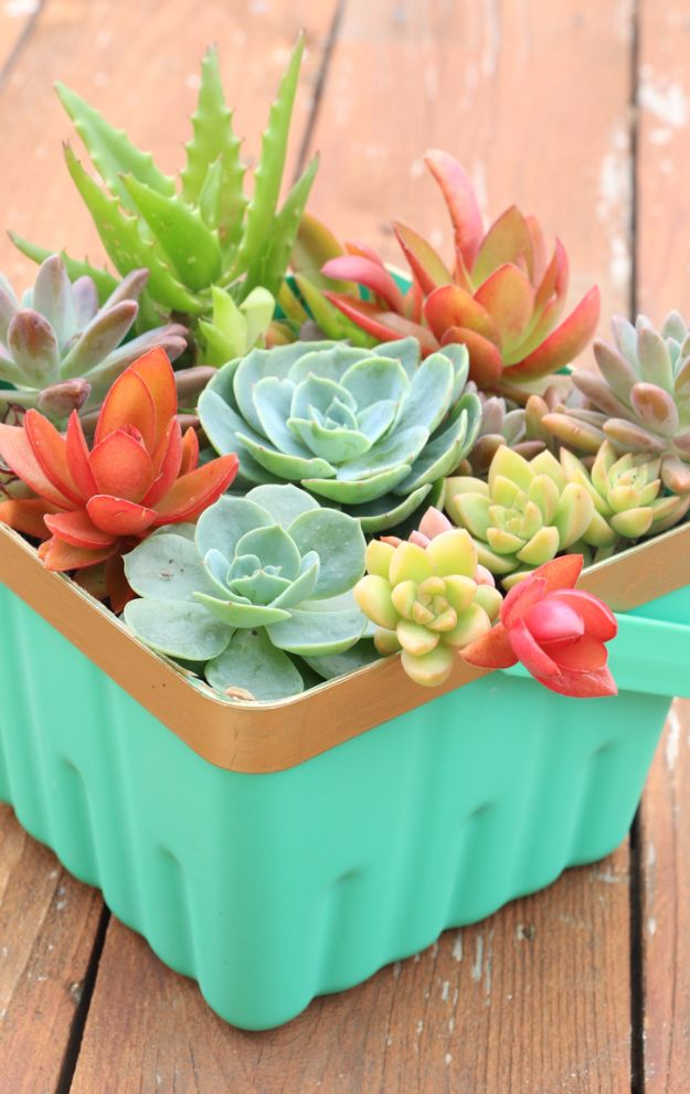 Best DIY Ideas for Teens To Make This Summer - Simple Berry Basket Succulent Planter - Fun and Easy Crafts, Room Decor, Toys and Craft Projects to Make And Sell - Cool Gifts for Friends, Awesome Things To Do When You Are Bored - Teenagers - Boys and Girls Love Making These Creative Projects With Step by Step Tutorials and Instructions #diyideas #summer #teencrafts #crafts