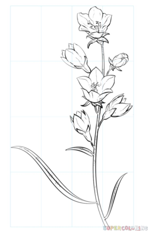 Flower Drawing Tutorials - Draw A Bell Flower - Simple Tutorial for Easy Flower Doodles, Vintage Design Ideas for Flowers, Step by Step Pencil Drawings - How to Draw a Rose, Lily, Hibiscus, Daisy