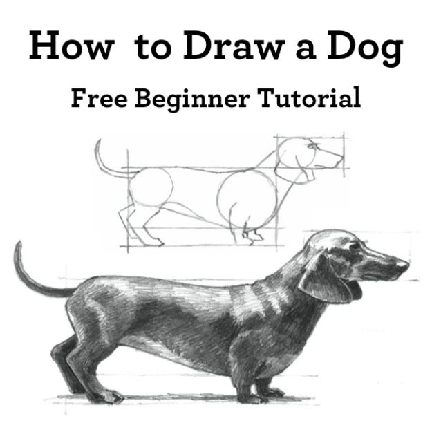 How to Draw Dogs - Draw A Dachshund - Easy Step by Step Drawing Tutorial - Learn How To Draw A Dog and Cute Puppies - Cartoon and Realistic Animals