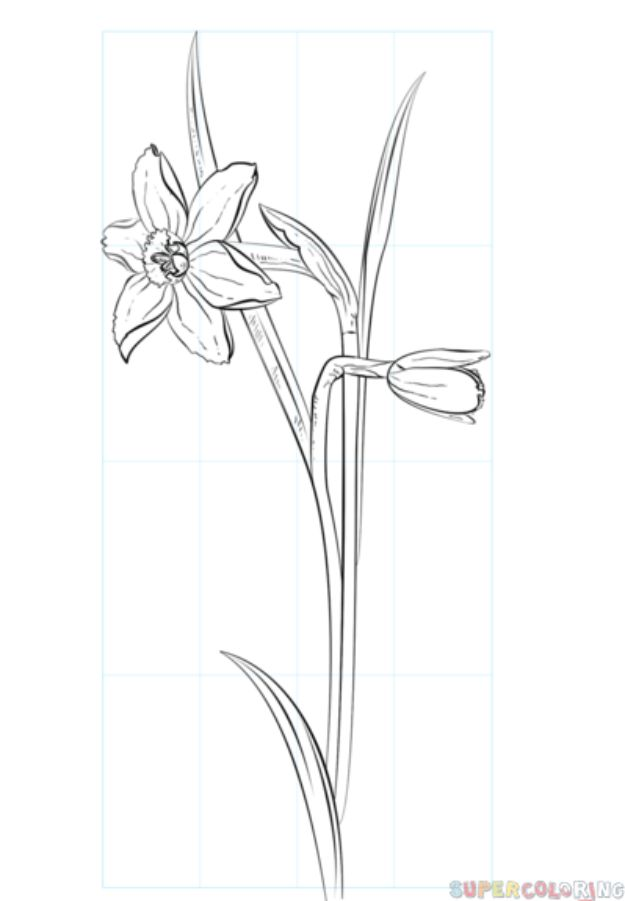 Flower Drawing Tutorials - Draw A Daffodil - Simple Tutorial for Easy Flower Doodles, Vintage Design Ideas for Flowers, Step by Step Pencil Drawings - How to Draw a Rose, Lily, Hibiscus, Daisy