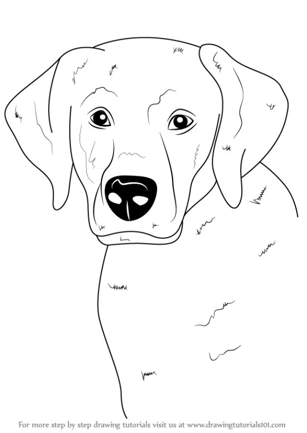 How to Draw Dogs - Draw A Labrador Face - Easy Step by Step Drawing Tutorial - Learn How To Draw A Dog and Cute Puppies - Cartoon and Realistic Animals