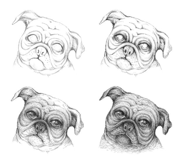 How to Draw Dogs - Draw A Pug Dog - Easy Step by Step Drawing Tutorial - Learn How To Draw A Dog and Cute Puppies - Cartoon and Realistic Animals