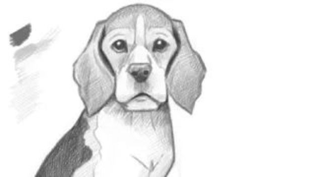 How to Draw Dogs - Draw A Puppy - Easy Step by Step Drawing Tutorial - Learn How To Draw A Dog and Cute Puppies - Cartoon and Realistic Animals