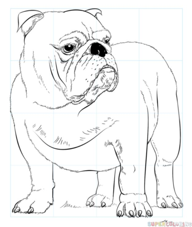 How to Draw Dogs - Draw An English Bulldog - Easy Step by Step Drawing Tutorial - Learn How To Draw A Dog and Cute Puppies - Cartoon and Realistic Animals
