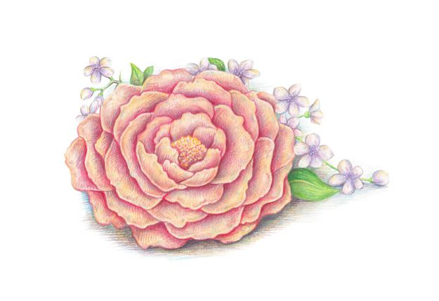 Flower Drawing Tutorials - Draw Spring Flowers With Colored Pencils - Simple Tutorial for Easy Flower Doodles, Vintage Design Ideas for Flowers, Step by Step Pencil Drawings - How to Draw a Rose, Lily, Hibiscus, Daisy