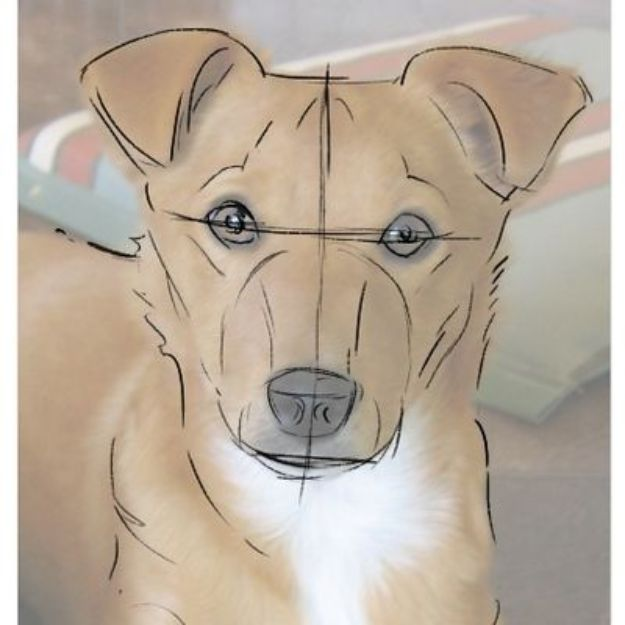 How to Draw Dogs - Draw a Dog From a Photograph - Easy Step by Step Drawing Tutorial - Learn How To Draw A Dog and Cute Puppies - Cartoon and Realistic Animals