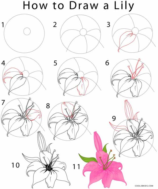 Flower Drawing Tutorials - Draw a Lily - Simple Tutorial for Easy Flower Doodles, Vintage Design Ideas for Flowers, Step by Step Pencil Drawings - How to Draw a Rose, Lily, Hibiscus, Daisy