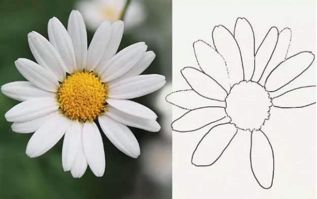 Flower Drawing Tutorials - Draw a Realistic Daisy - Simple Tutorial for Easy Flower Doodles, Vintage Design Ideas for Flowers, Step by Step Pencil Drawings - How to Draw a Rose, Lily, Hibiscus, Daisy