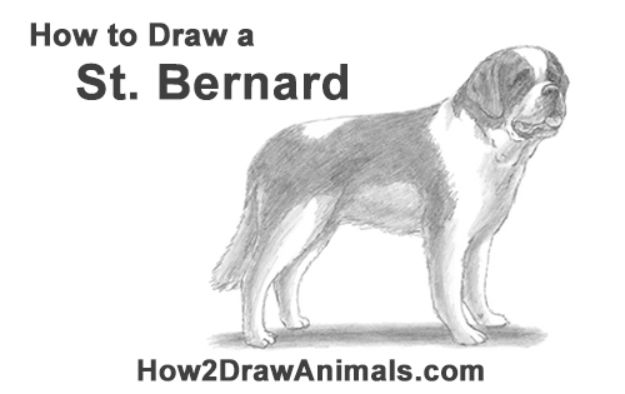 How to Draw Dogs - Draw a St. Bernard Dog - Easy Step by Step Drawing Tutorial - Learn How To Draw A Dog and Cute Puppies - Cartoon and Realistic Animals