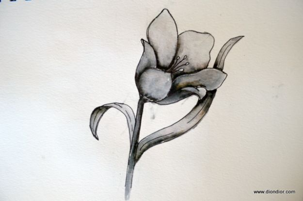 Flower Drawing Tutorials - Drawing Bowl-Shaped Flowers - Simple Tutorial for Easy Flower Doodles, Vintage Design Ideas for Flowers, Step by Step Pencil Drawings - How to Draw a Rose, Lily, Hibiscus, Daisy