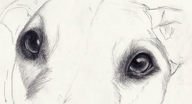 Eye Drawing Tutorials - Draw Amazingly Realistic Dog Eyes - Eays Ways to Learn How to Draw Eyes - How To Draw A Realistic Eye - Shading Eyes, Coloring Techniques and Step by Step Tutorials for Eye Drawings