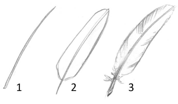 Easy Things to Draw When You Are Bored - Draw Feathers - Quick and Cool Drawing Lessons for Fun Art - How to Draw Basic Things, Cartoons, Animals, Flowers, People