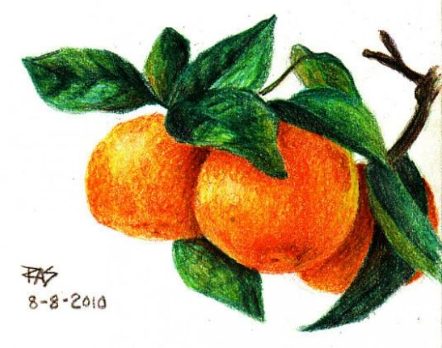 Easy Things to Draw When You Are Bored - Draw Tangerines with Colored Pencils - Quick and Cool Drawing Lessons for Fun Art - How to Draw Basic Things, Cartoons, Animals, Flowers, People